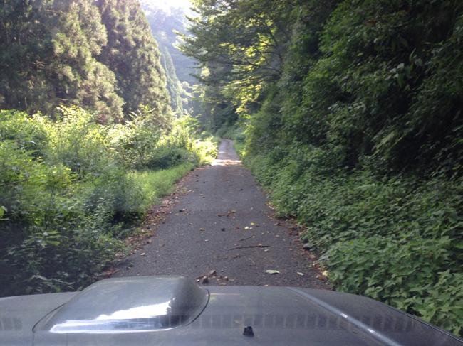 日の裏林道 1