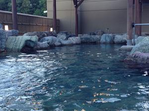 武芸川温泉 3