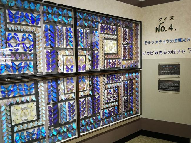 名和昆虫博物館 1 1919