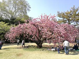 新宿御苑 3