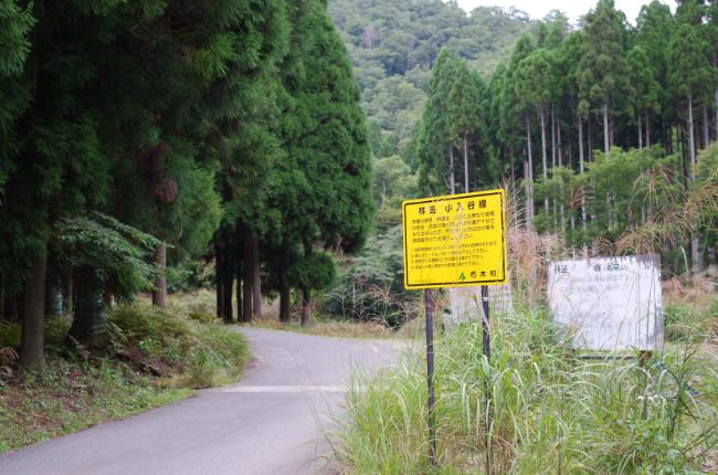 林道 小入谷線 2