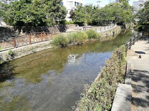 清水川緑地 カルガモ 1